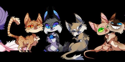 Cat Line-up