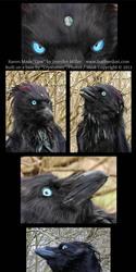 Qaw the Raven