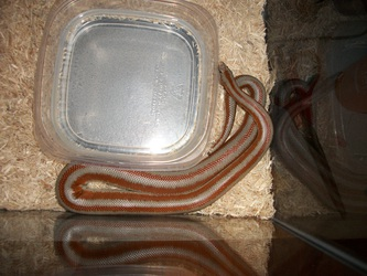 Snake in corner