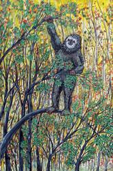 Sasquatch as sloth