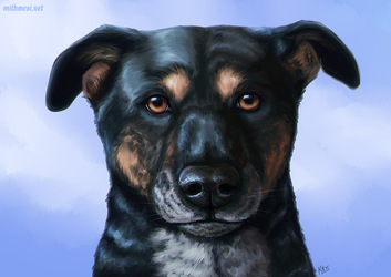 Pooch Portrait