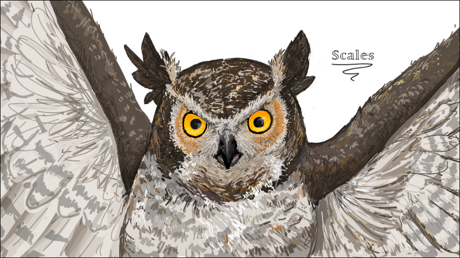 Most recent image: Great horned owl