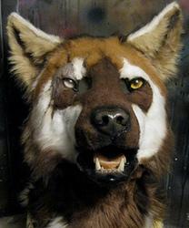 Zarkayrin mask commission