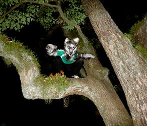 Tree Pounce