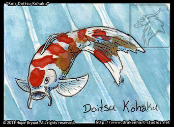 Koi: Doitsu Kohaku