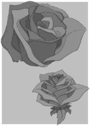 Airplane Rose Sketches