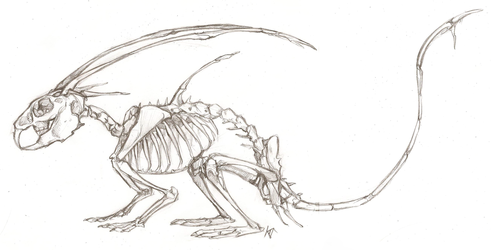 Mikken Skeleton