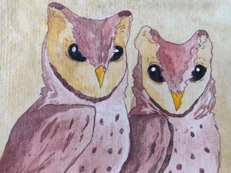 Bay Owls