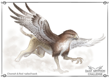 Daily Gryphon Challenge 11: Cheetah & Red tailed hawk