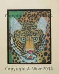 Leopard Study #1