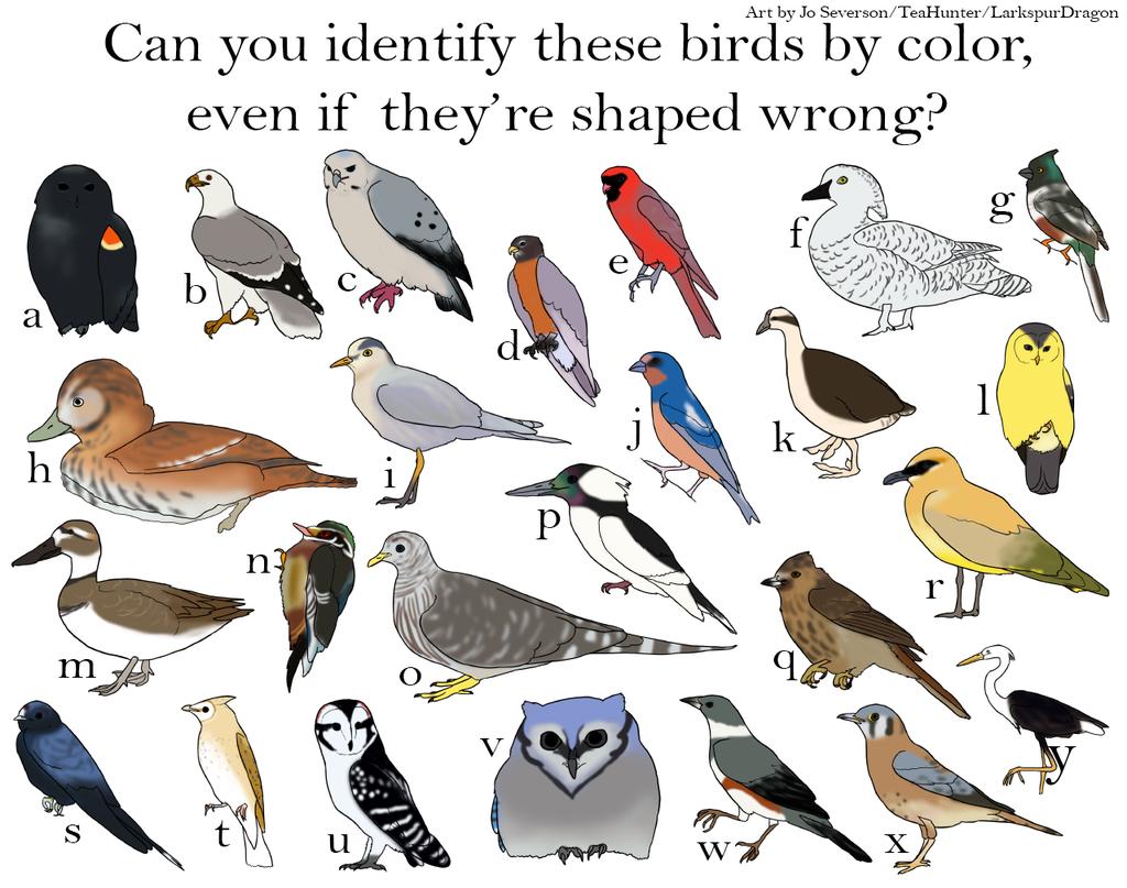 Most recent image: PROVE YOUR STUFF, BIRDERS