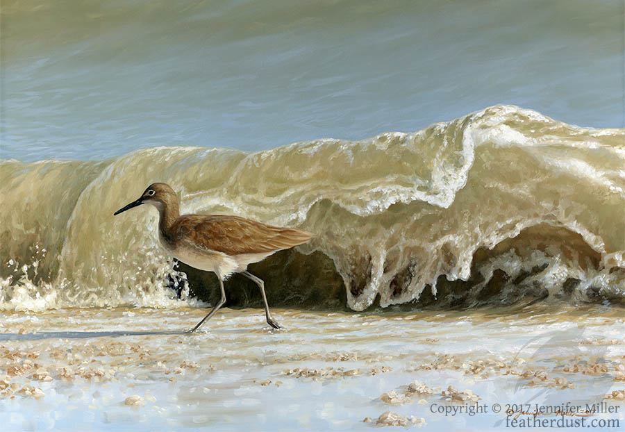 Willet - Here Comes Another!