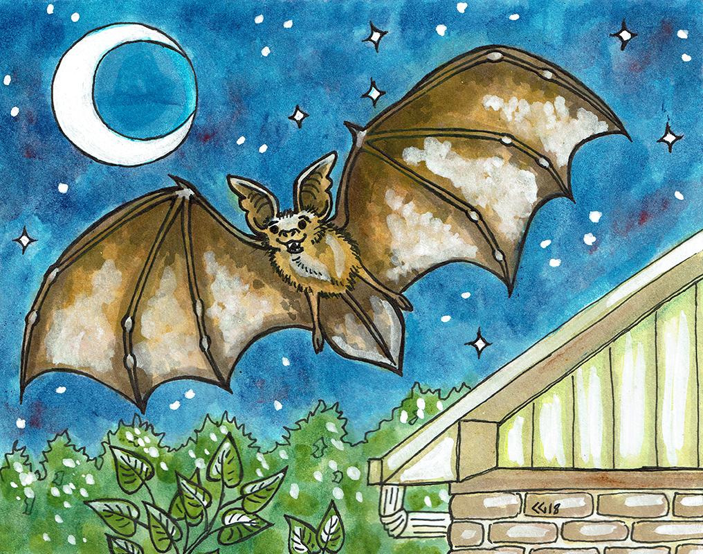 Bat Flying