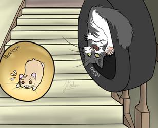 CAT VS HAM
