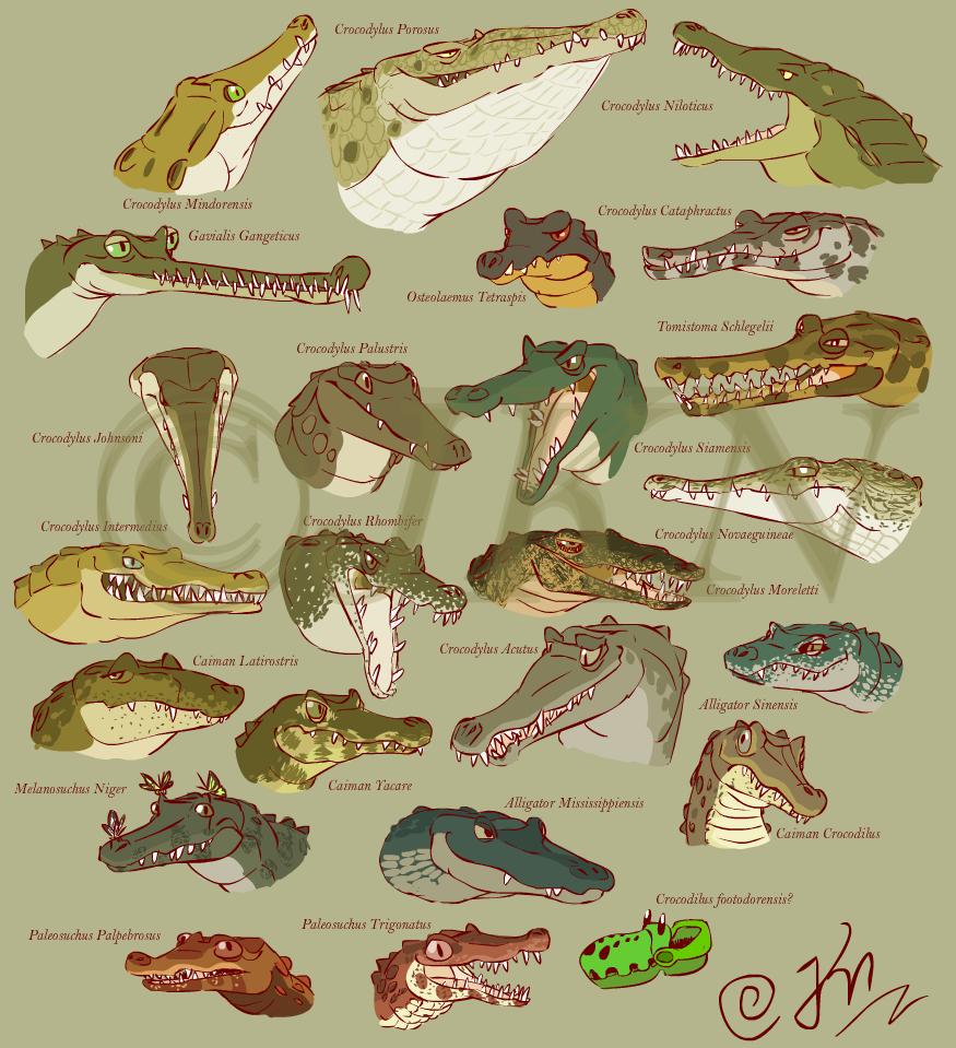 Featured image: Crocodilia