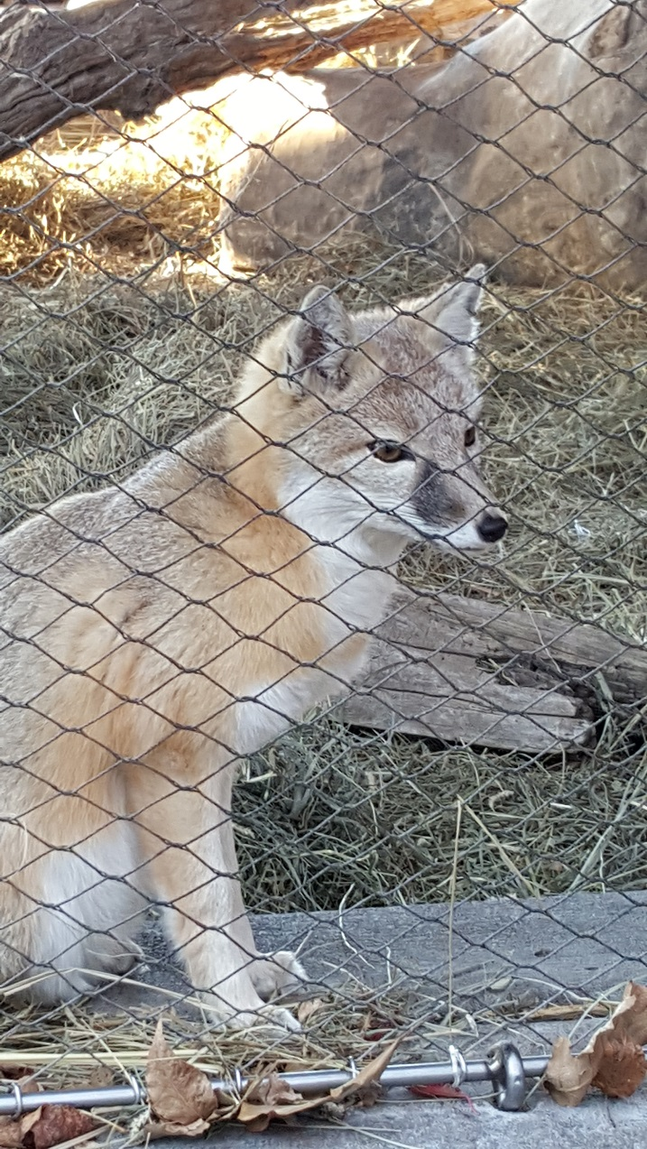 Fox Jail