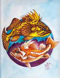 China Rockfish, Copper Rockfish