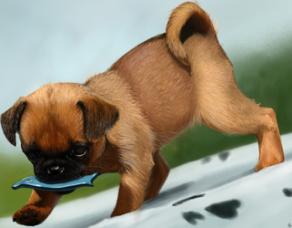 Archibal - Puppy study