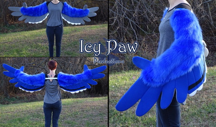Bluejay wings