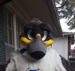 Victor Redtail New MoreFurLess Head Front View