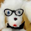avatar of doggables