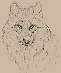 Wolf Study [sketch] [2020]