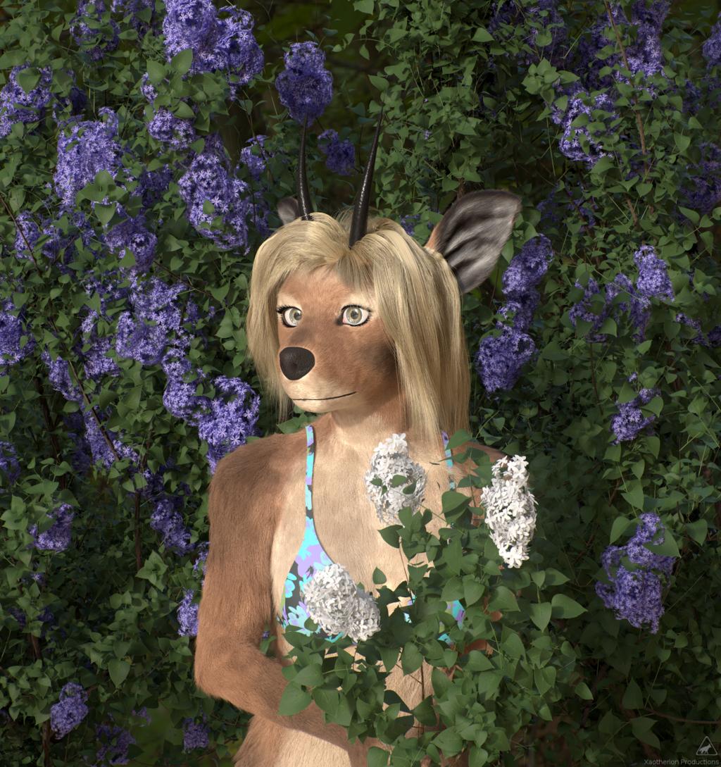 Most recent image: Klipspringer and lilacs