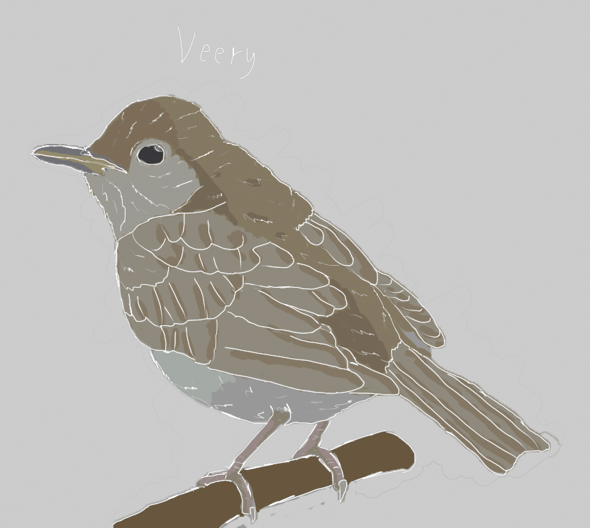 Most recent image: Veery Bird Colored