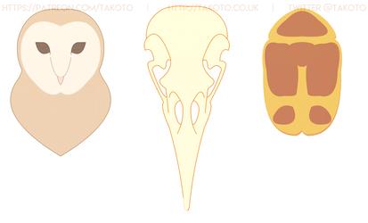 Owl Crow Beetle