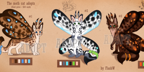 The cat moth adopts (Fixed price)