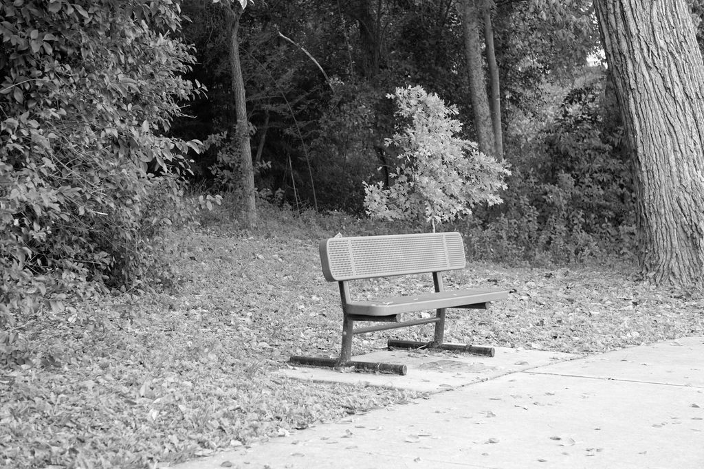 Most recent image: Lonely Bench