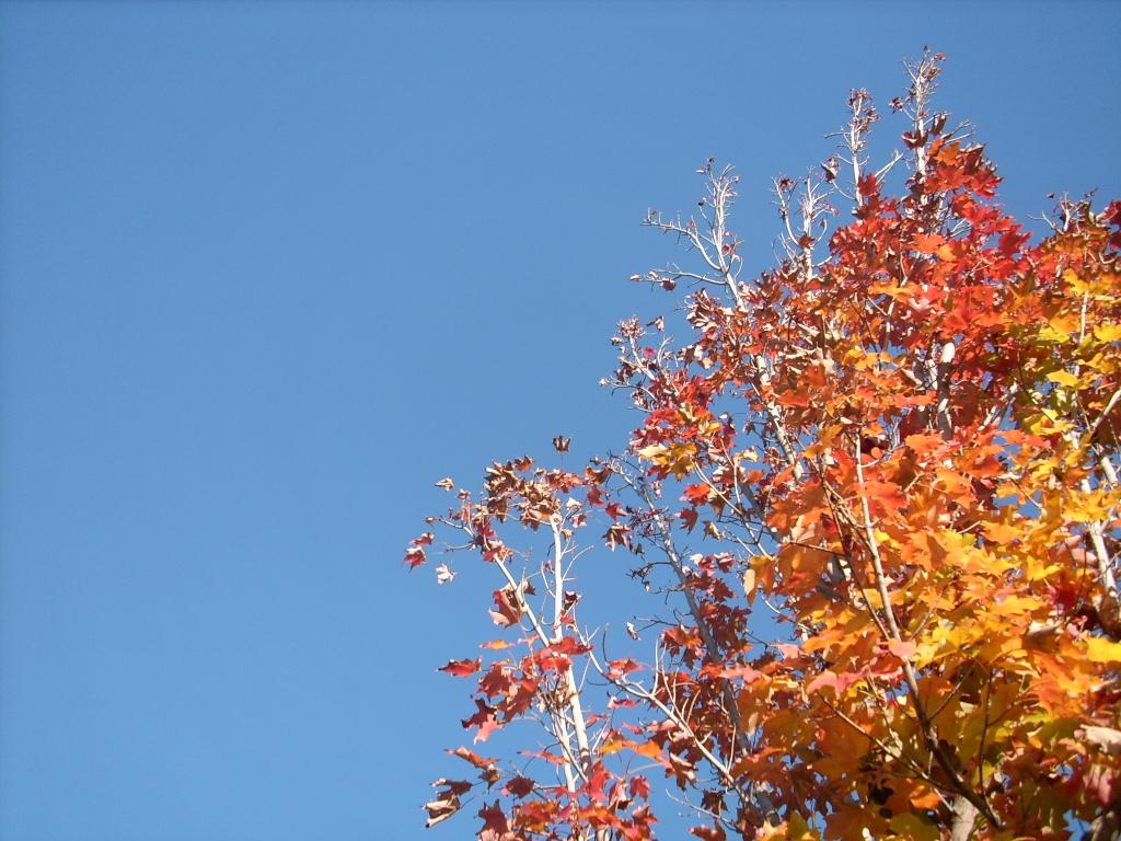 Most recent image: Cold November Skies