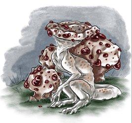 Mayshroom Hydnellum