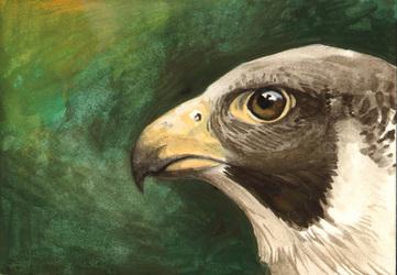 Falcon Study