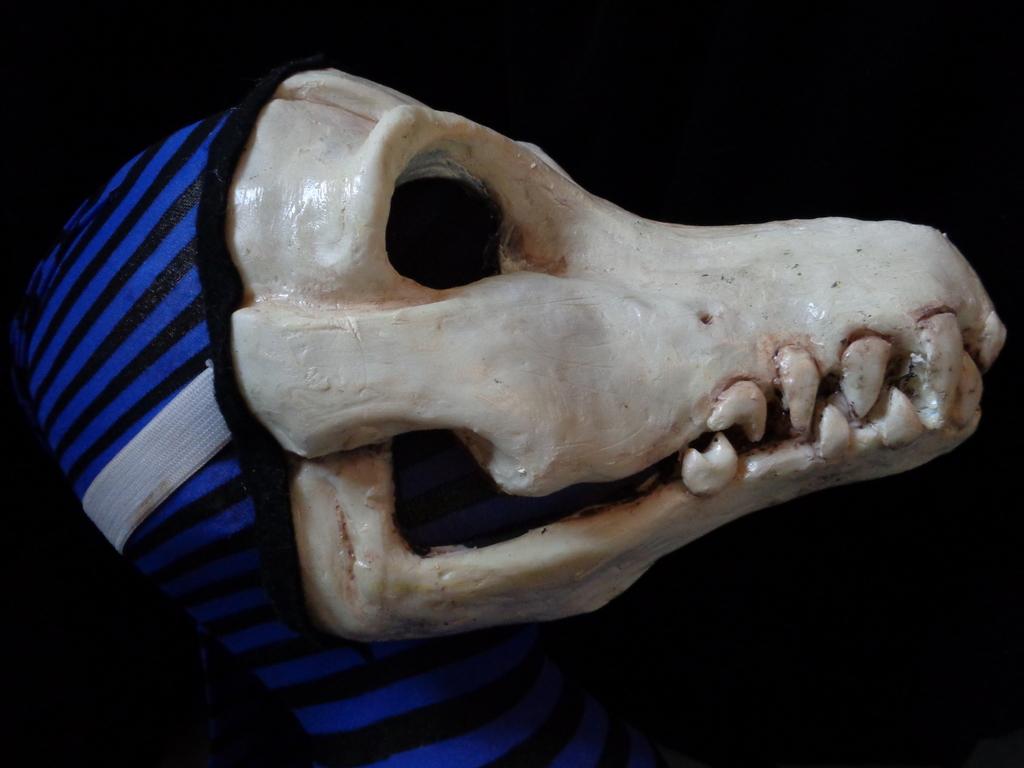 Most recent image: The Bones