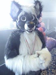 FWA 10 2013: Wolfang Cerberus!