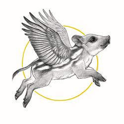 Little flying boar