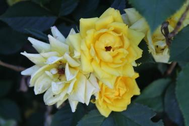 2015 flowers