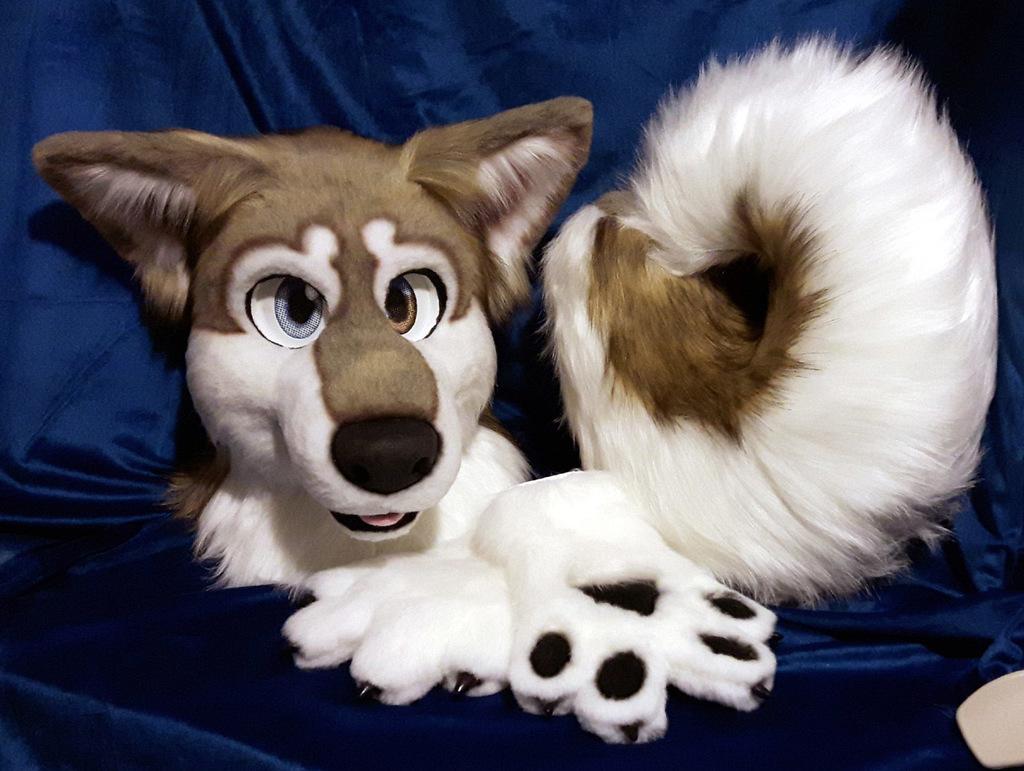 Wolf/Husky
