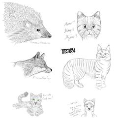 Animals !