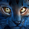 avatar of CatWarrior