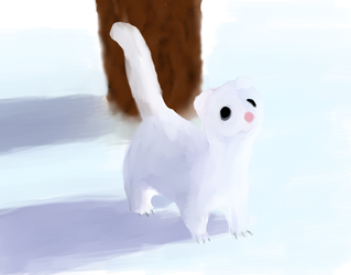 Color study of a white ferret