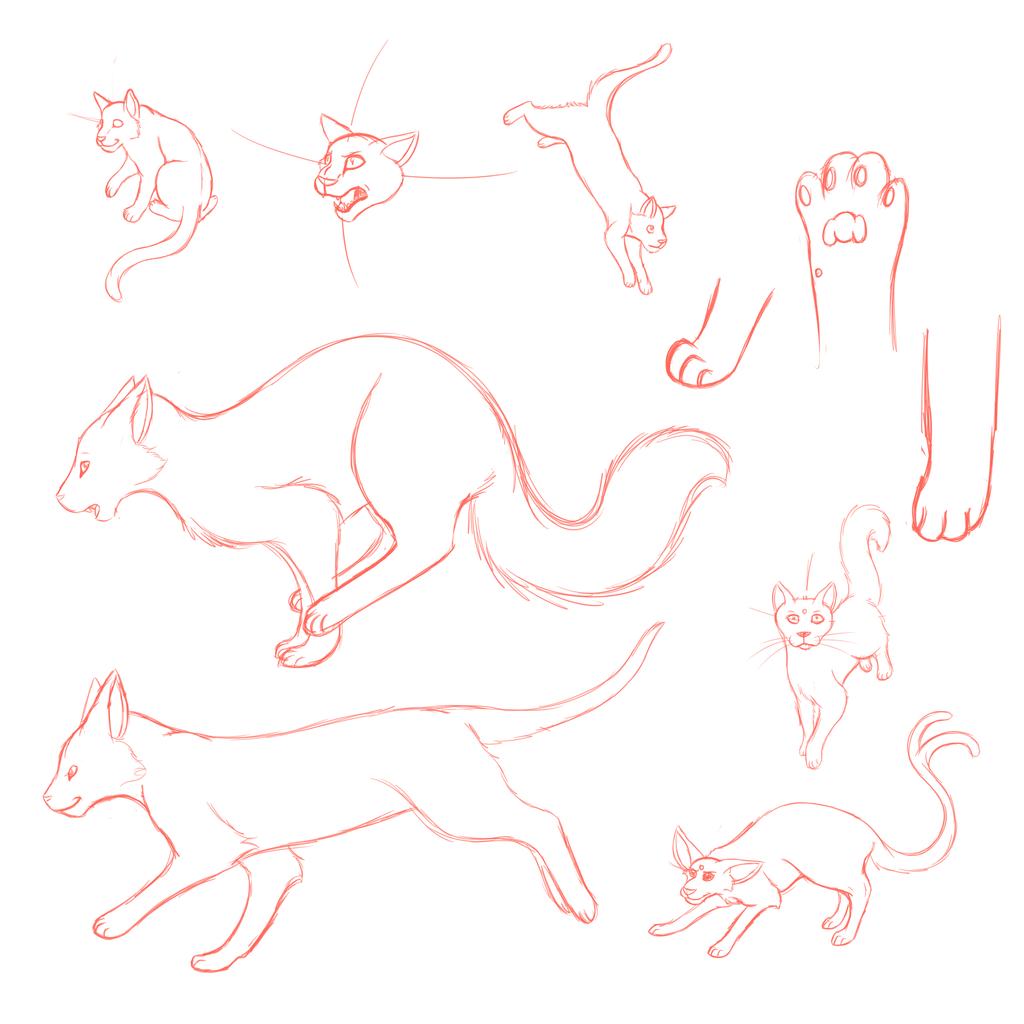 Cat Practice