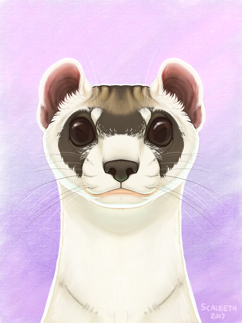 [iPad] Black-Footed Ferret Portrait