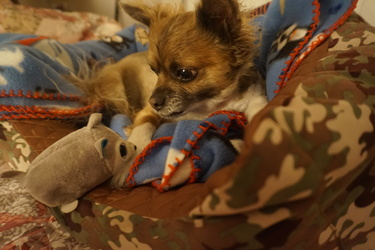 Harley looking at his toy