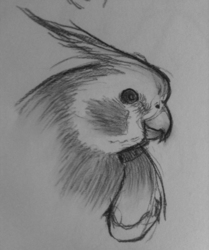 Charcoal Drawing 1: Sammy 1