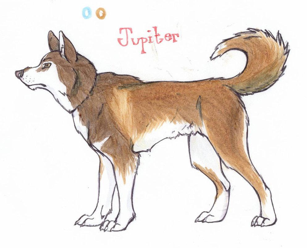 Jupiter Reference