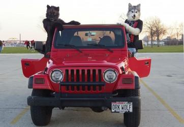 The Darkwolfs