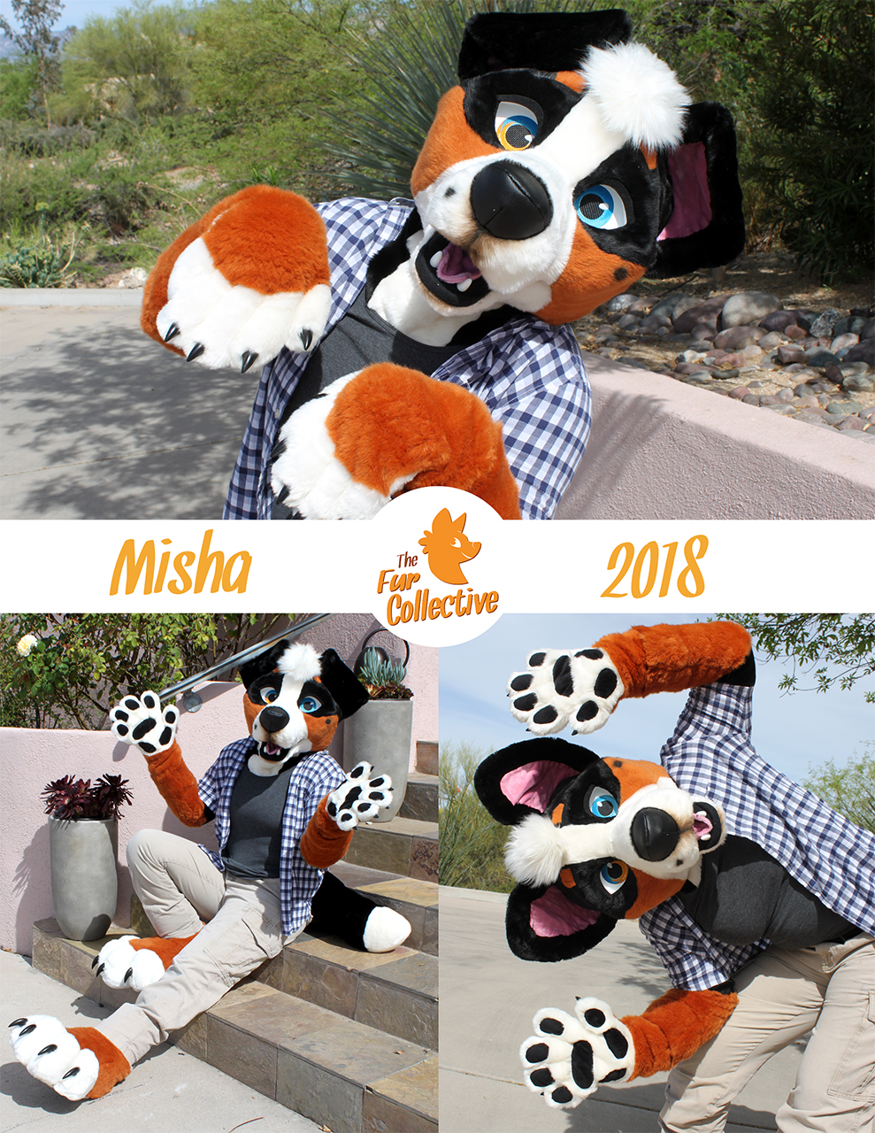 Misha Mountain Dog!