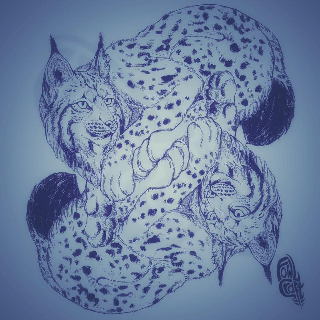 Most recent image: Symmetry Lynxes